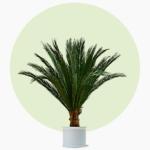 Phoenix Palme Kunstpalme Dekopalme